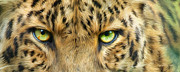 Leopard Mixed Media Posters - Wild Eyes - Leopard Poster by Carol Cavalaris