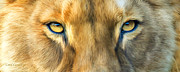 Lioness Mixed Media Posters - Wild Eyes - Lioness Poster by Carol Cavalaris