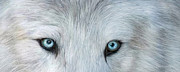 Wolf Eyes Framed Prints - Wild Eyes - White Wolf Framed Print by Carol Cavalaris