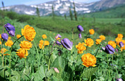 Wildflower Photos Prints - Wild Flowers Print by Anonymous