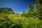 Wild Flowers Glacier National Paintedpark   Print by Rich Franco