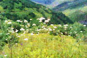 Magomed Magomedagaev - Wild flowers in mountain...