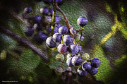 Grape Leaf Framed Prints - Wild Grapes in Oil Framed Print by LeeAnn McLaneGoetz McLaneGoetzStudioLLCcom