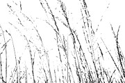 Home Prints Digital Art - Wild Grasses Abstract by Natalie Kinnear