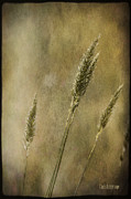 Chris Armytage - Wild grasses