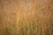 Mark Severn Metal Prints - Wild Grasses Metal Print by Mark Severn
