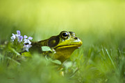 Green Frog Prints - Wild Green Frog Print by Christina Rollo