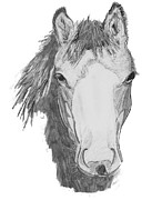 Wild Pony Drawings Prints - Wild Horse Print by Catherine Roberts