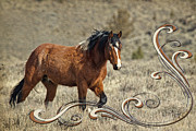 Forelock Photos - Wild Horse Harmony D9219 by Wes and Dotty Weber