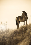 Sea Grass Posters - Wild Horse on the Beach Poster by Diane Diederich