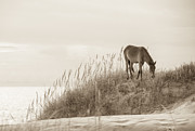 Sea Grass Posters - Wild Horse on the Outer Banks Poster by Diane Diederich