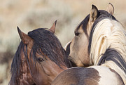 Wild Horse Photo Metal Prints - Wild Horse Secrets Metal Print by Carol Walker