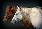 Racing Mustangs Prints - Wild Horses Print by Daniel Hagerman