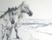 Ball Point Pen Paintings - Wild Horses drawing by Mike Jory
