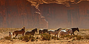 Monument Valley Prints - Wild Horses in the Desert Print by Susan  Schmitz