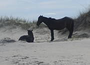 Dunes Art - Wild Horses of Corolla 2  by Cathy Lindsey