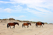Atlantic Ocean Mixed Media Posters - Wild Horses of Corolla - Outer Banks OBX Poster by Design Turnpike