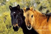 Thomas and Pat Leeson - Wild Horses