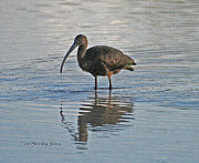 Tom Janca - Wild Ibis At The GRP