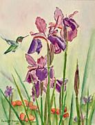 Kathryn Duncan - Wild Iris Nectar