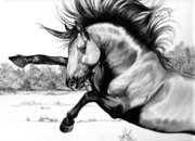 Horse Images Drawings Prints - Wild Kiger Mustang Stallion Print by Cheryl Poland