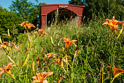 Geobob Metal Prints - Wild Lillies and Holliwell Covered Bridge Madison County Iowa Metal Print by Robert Ford