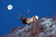 Nature - Wild Moon by Shane Bechler