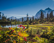 Amazing Landscape Prints - Wild Mountain Flowers Print by Puget  Exposure