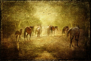 Wild Horses Mixed Media Framed Prints - Wild Mustangs Framed Print by Ozana Sturgeon