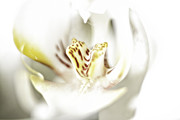 Spa Art Prints - Wild Orchid Print by Erik Brede