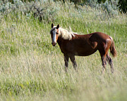 Roaming Photo Posters - Wild Palomino Poster by Sabrina L Ryan