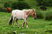 James Brunker - Wild Ponies on Bodmin Moor