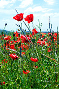South Of France Art - Wild Poppies by Fine Art  Photography