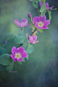 Wild-flower Photo Posters - Wild Roses Poster by Priska Wettstein