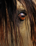 Melinda Hughes-Berland - Wild Spirit