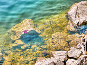 Snorkeling Digital Art - Wild starfish on rocks by Eti Reid