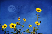 Manipulated Framed Prints - Wild Sunflowers Framed Print by Juli Scalzi