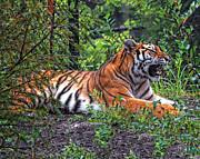 Mary Almond - Wild Tiger