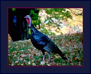 Americans Mixed Media Posters - Wild Tom Turkey Poster by L Brown