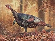 Feathers Painting Prints - Wild Turkey Print by Hans Droog