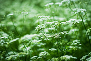 Porridge Photos - Wild Vegetation by Alexander Senin