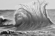 Rogers Beach Prints - Wild Wave BW Print by Anahi DeCanio