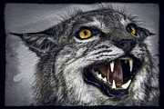 Bobcats Metal Prints - Wildcat Ferocity Metal Print by Daniel Hagerman
