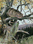 Forest Drawings Prints - Wildcat in a Tree Print by Wilhelm Kuhnert