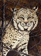 Rick Bainbridge - Wildcat