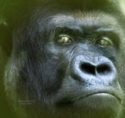 Gorilla Mixed Media Posters - WildEyes-Silverback Poster by Carol Cavalaris