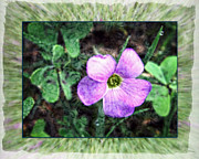 Art Product Mixed Media Prints - Wildflower and Clover - photographic art Print by Ella Kaye