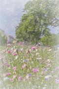 Elaine Teague - Wildflower Impressionism