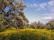 Cyprus Posters - Wildflower Meadow Poster by Alex Cassels