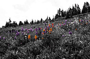 Gore Range Photos - Wildflower Medley by Jeremy Rhoades